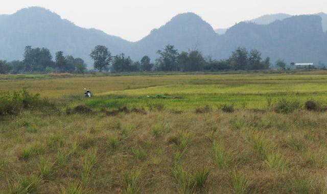 kanchanaburi-thailand-rice-field