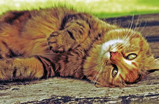 john-r-park-homestead-cat