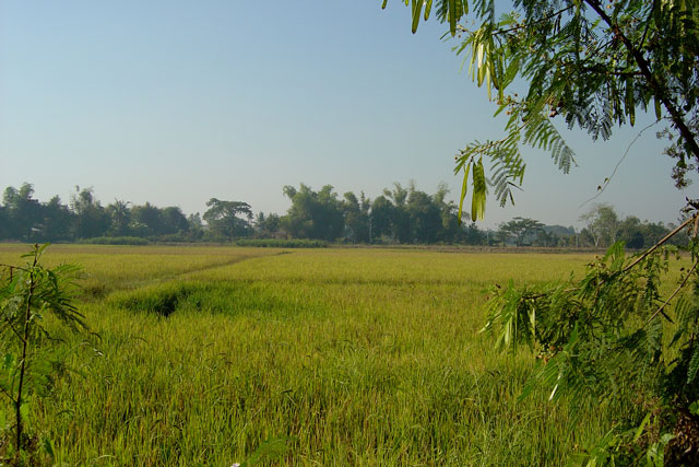 San-Kamphaeng-Rice-Field