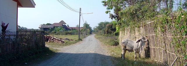 the-road-beside-my-room-san-kamphaeng