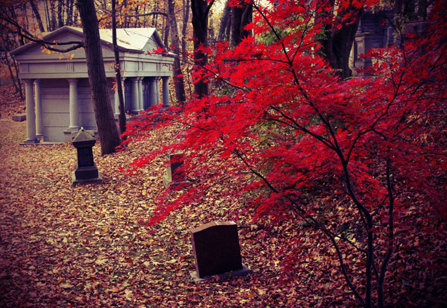 mount pleasant cemetery red maple