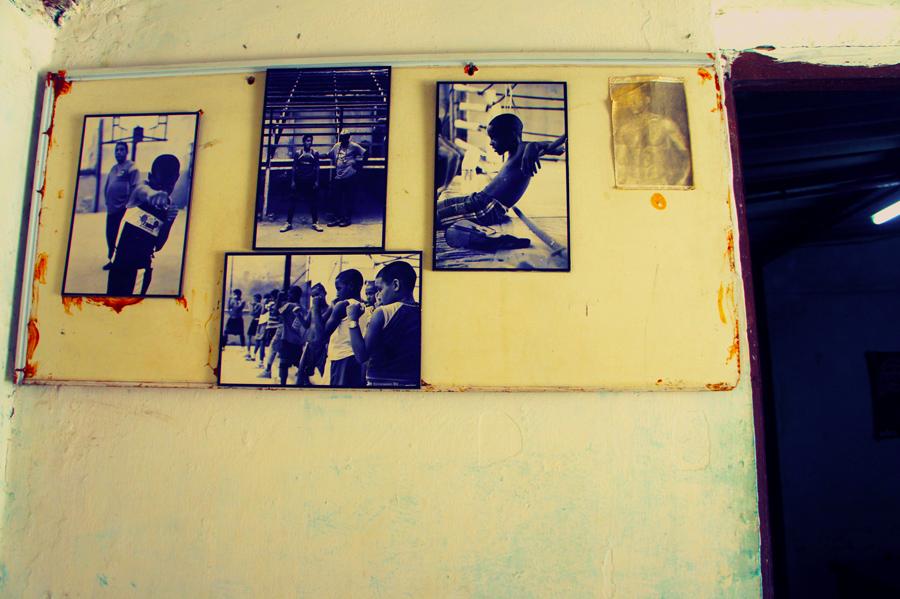 Havana-Boxers